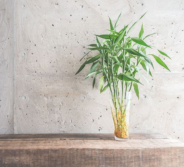 Plant in a vase on a table.
