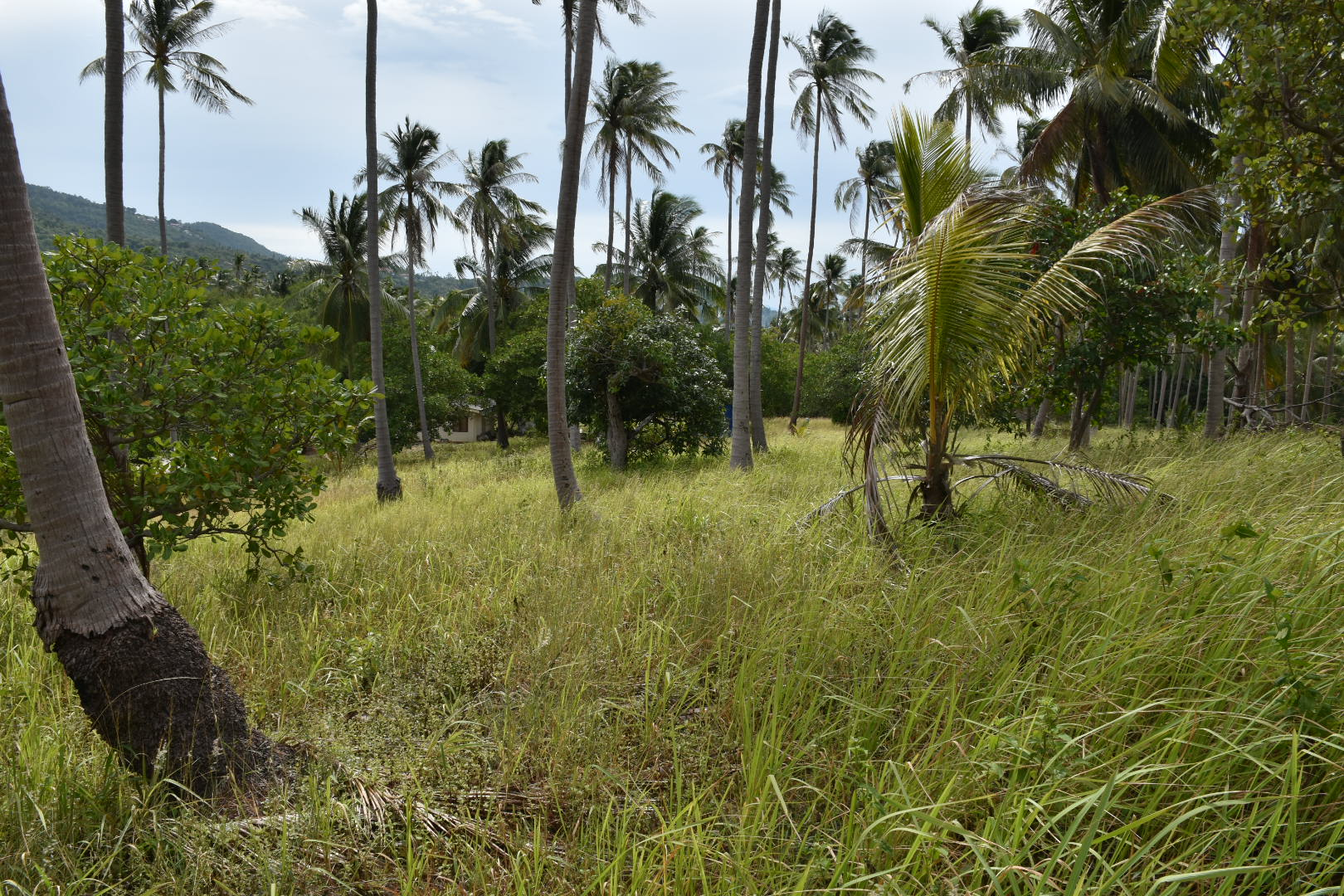coconut view plot of land koh samui